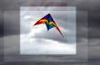 bluemarine_logo