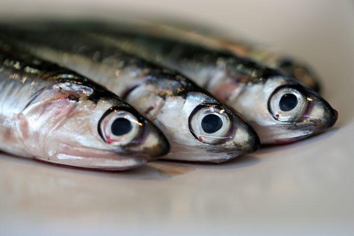 To catch a mackerel